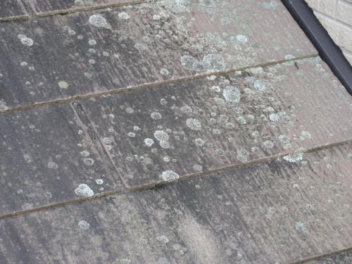 ケイナスホーム スレート屋根 藻の発生 カビの発生