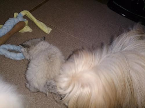 犬と猫の同居のすすめ