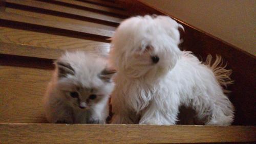 子犬と子猫の写真撮影