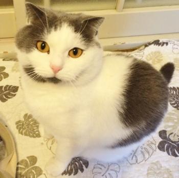 猫のペットシッター