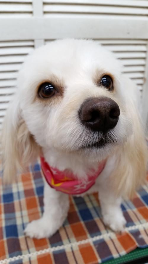 MIX犬のメロちゃん