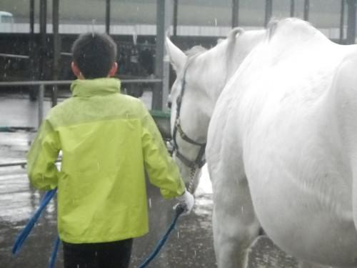 馬の学校 体験合宿