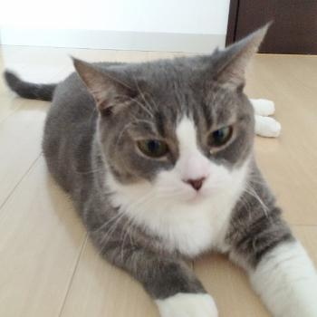 猫ちゃんのペットシッター