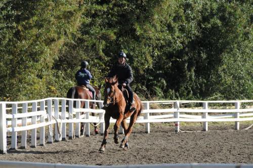 乗馬レッスン 富里トレーニングファーム