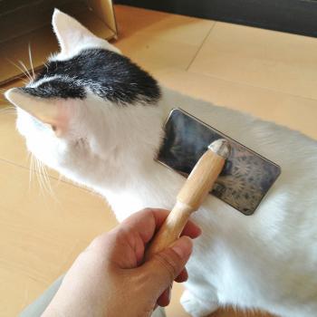 猫のペットシッター ケア中