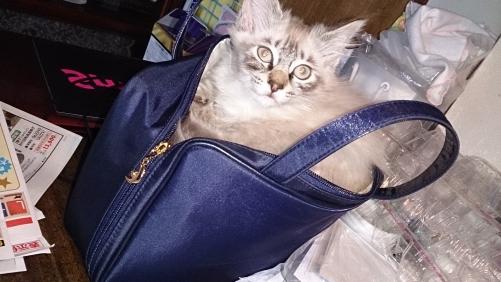 バッグin猫