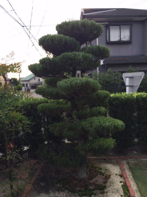 庭木剪定、伐採、草刈り