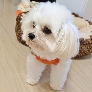 ミックス犬 W君!