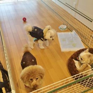 Dog Only わんこ用スペース(´∀`)