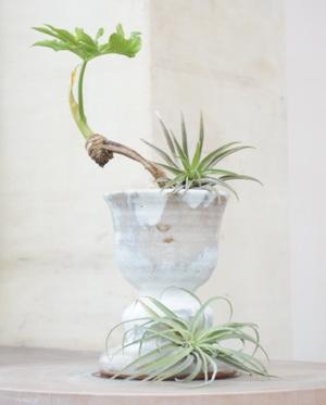 セロームという観葉植物を自作の鉢に植えてみました。
