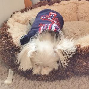 ミックス犬 寝てま~す♡