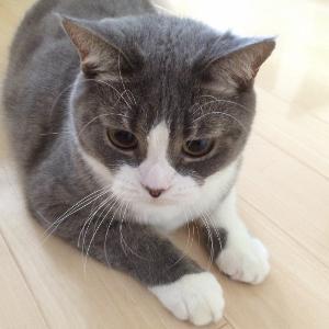 猫ちゃんのお世話 じっとみつめる