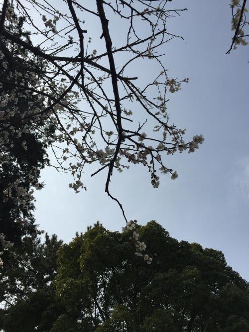 春スタート 主婦バレエストレッチ 茅ケ崎