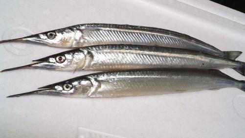さより!ヘルシーな白身魚です。お寿司も出来ます!
