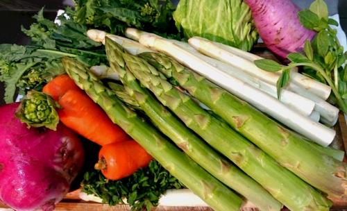 春野菜!!