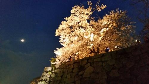 舞鶴公園 月と夜桜