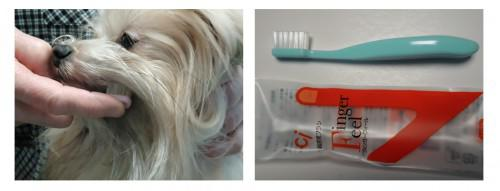 歯肉炎予防は、歯ブラシ。