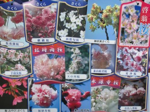桜の販売はお任せください!桜ラベルのご紹介!