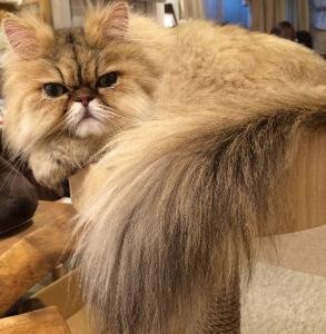 ふさもこ猫さん