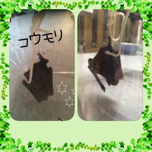 コウモリ( ゚д゚)