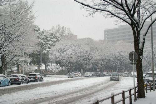 大雪の予報が出ています。