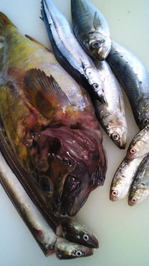 旬の魚!塩焼き、煮魚など、ヘルシーな魚料理をどうぞ!