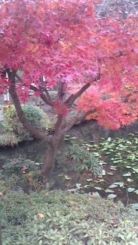調布の深大寺へ、紅葉を楽しみに。