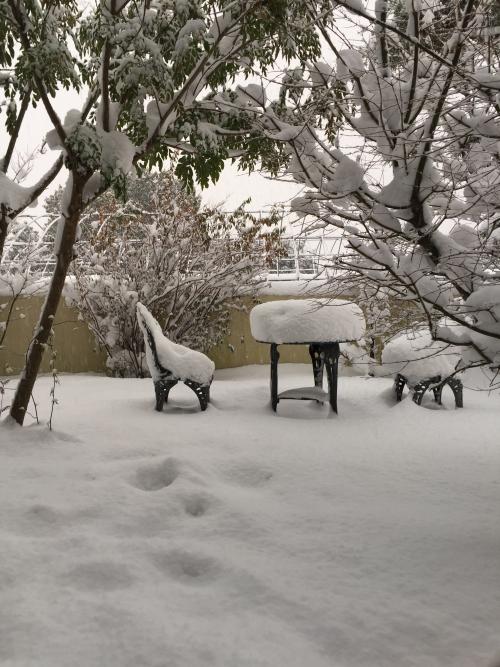 大雪の為、お休み