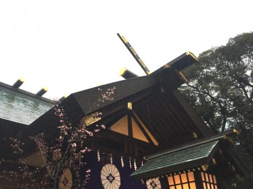 雨の東京大神宮♡