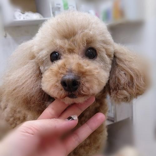 保護犬の預りボランティア