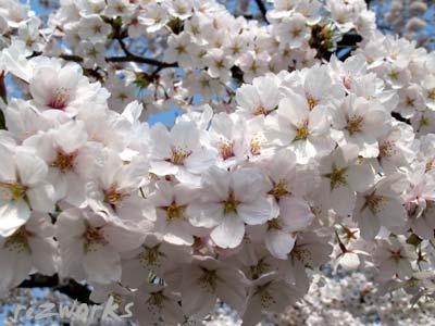 3月4月の【シータヒーリング】セミナー受講生さん募集中