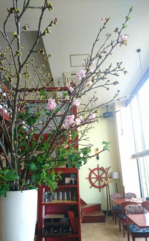 中目黒で一番早い桜の開花!?