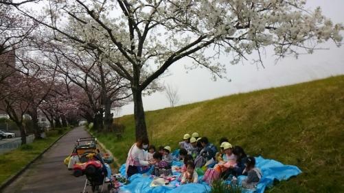 春の遠足 桜の下でお弁当食べたよ