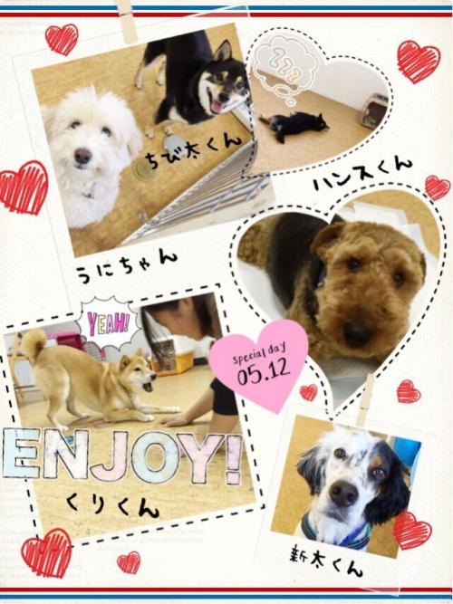 ニュージーランドの犬事情から日本を見てみる