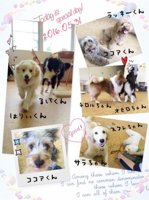 ハワイの犬事情から日本を見てみる