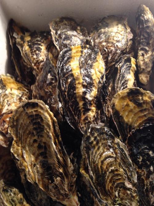 殻付き牡蠣(かき)