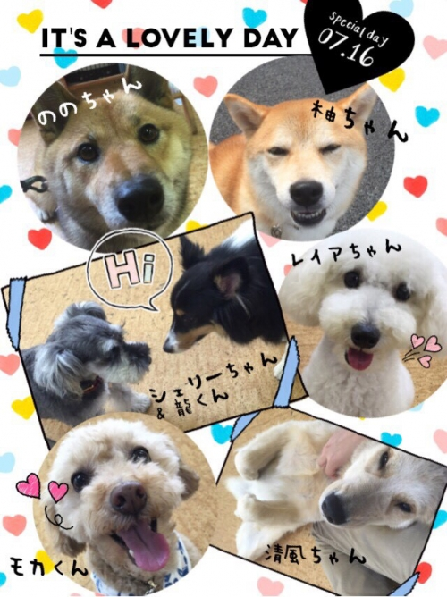 インドの犬事情から日本を見てみる