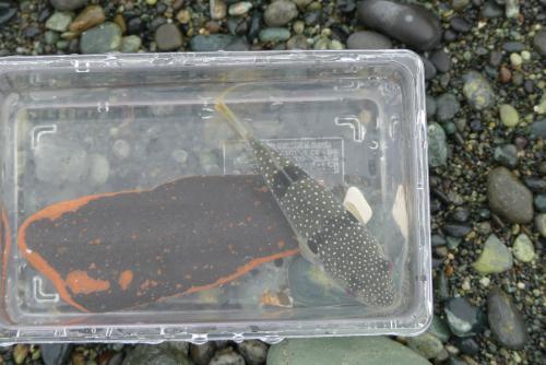 釣り教室 砂浜 キス釣り