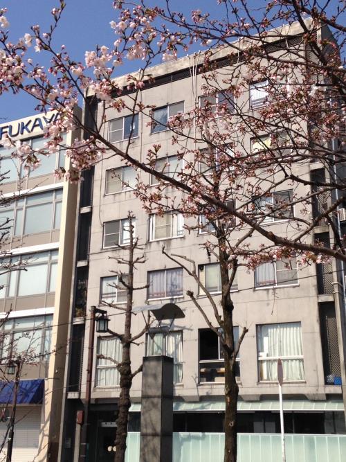 博多区の桜開花情報