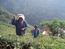 1月の紅茶【ダージリン《オータムナル》インド】