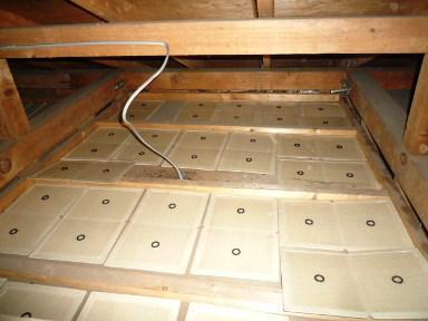 天井裏の鼠の捕獲作業