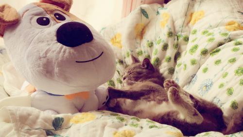 超〜癒し猫のカエラくん!サロンでも人気者です。ペットロスの方