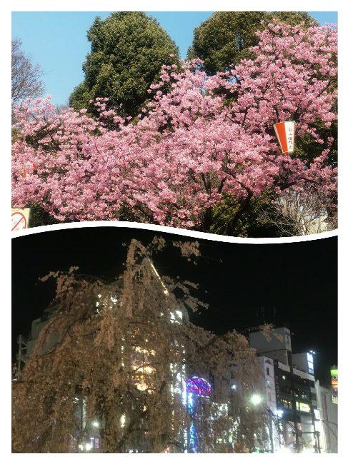 大好きな私の原点 上野の街