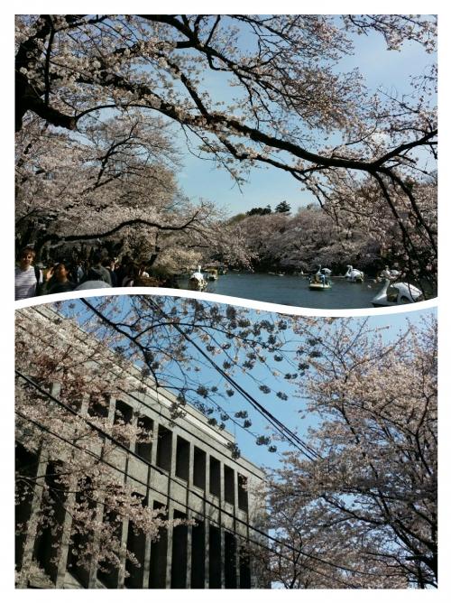 東京の桜も今日のこの風と共に…