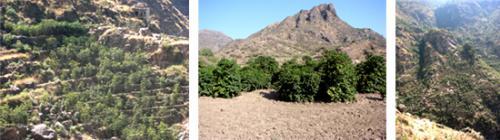 エチオピア『アラビカ種の原産地)』