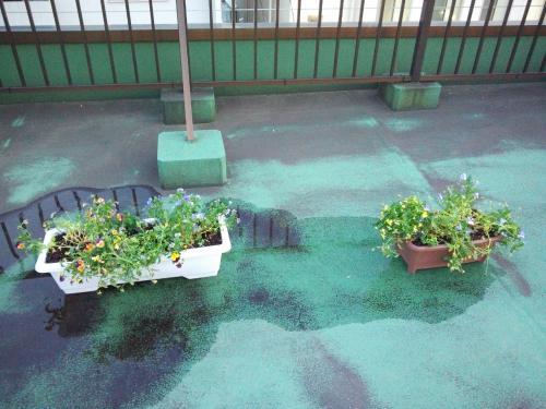 【つぶやき】お花たち