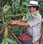 コロンビアコーヒー