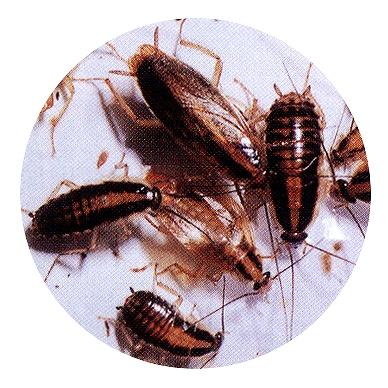 ゴキブリ駆除 館林市の飲食店