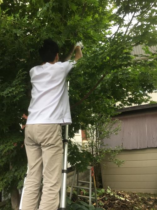 札幌市東区 庭の木伐採処分!