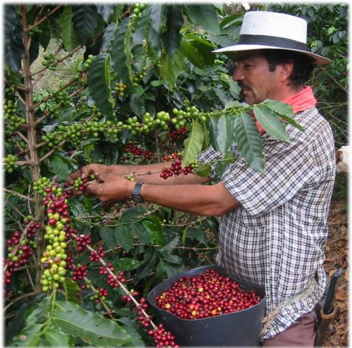 コロンビアウィラSUP